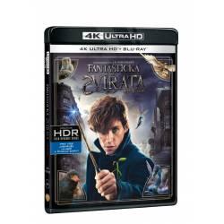 Blu-ray Fantastická zvířata a kde je najít, UHD + BD, CZ dabing